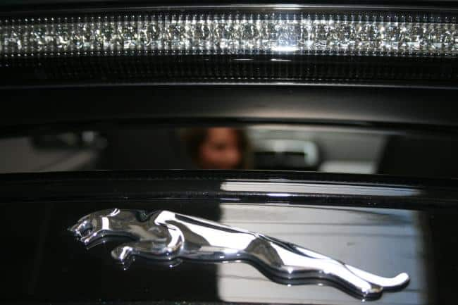 Jaguar: Samtpfote und Raubtier zugleich 9