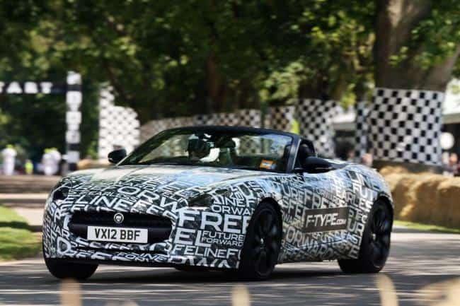 Jaguar: Samtpfote und Raubtier zugleich 11