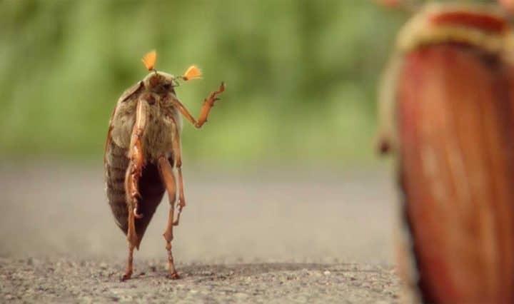 Opel Ampera-e Videowerbung
